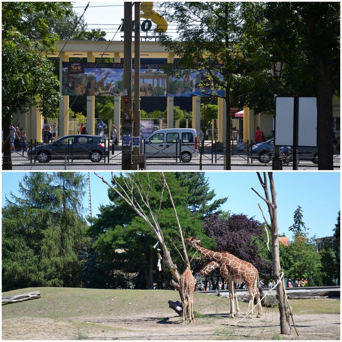 Wycieczka Do Zoo Verenne