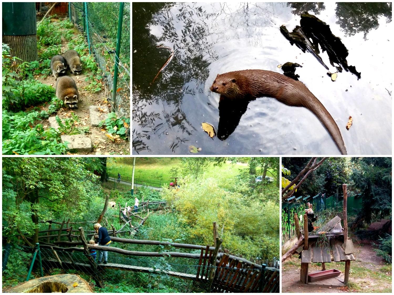 Zoo w Görlitz