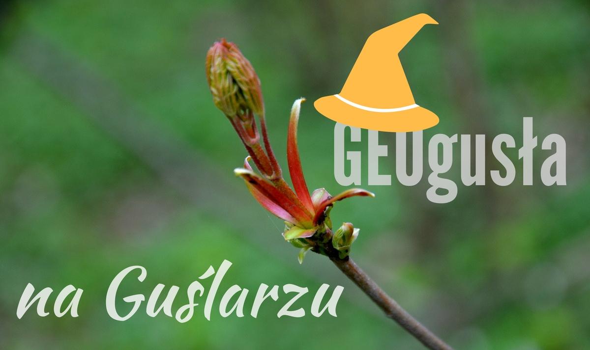 Guślarz - Výhledy - Gickelsberg - geocaching